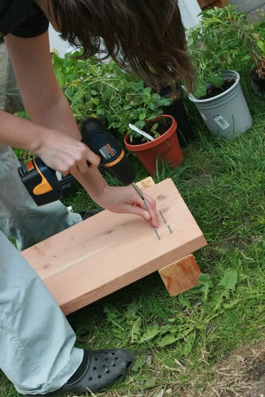 making raised garden beds - screwing screws into wood