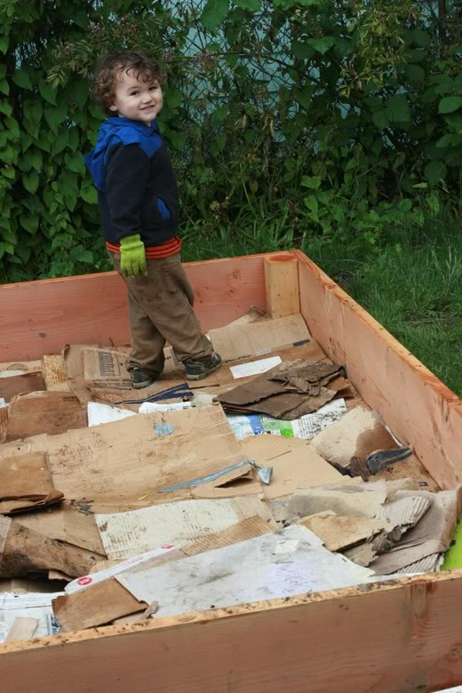making raised garden beds - toddler trampling cardboard lining