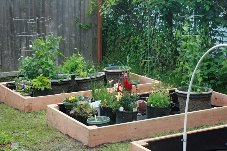 making 3 raised garden beds - just add soil