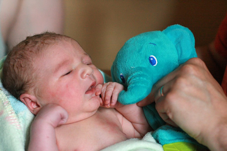 big brother and baby brother meeting — older sibling's gift of stuffed elephant toy to younger brother