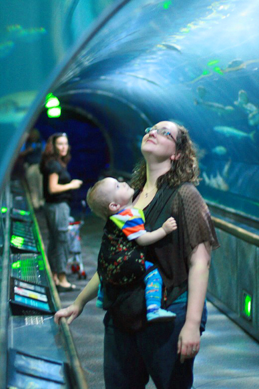 underwater tunnel at the aquarium of the bay — california road trip travel san francisco babywearing