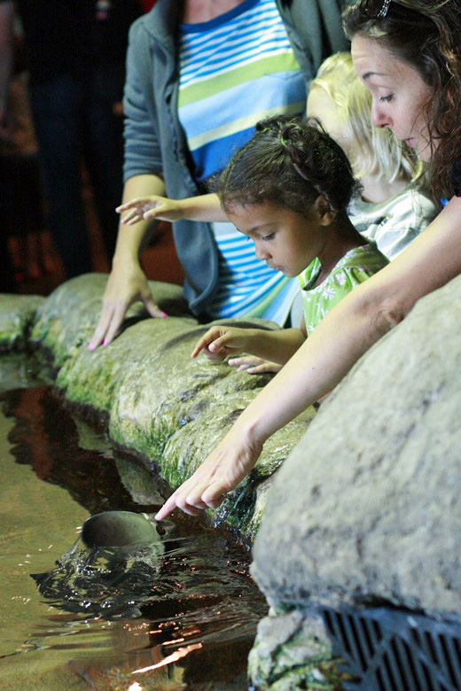 touching the tide pool sea creatures at the aquarium of the bay — california road trip travel san francisco hybrid rasta mama jennifer