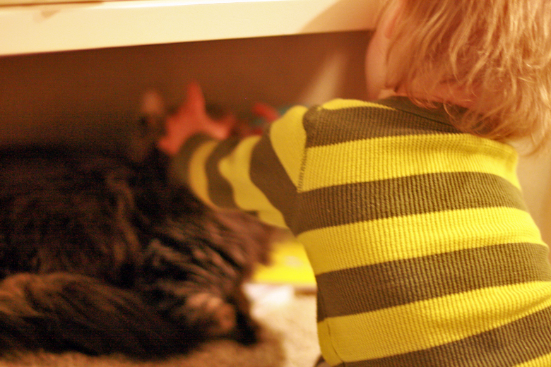 toddler boy hugging cat