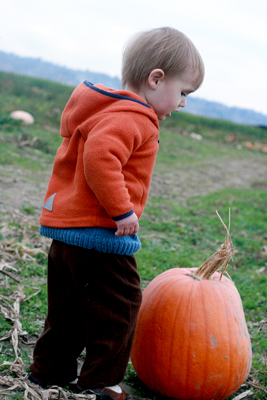Hobo Mama: Pumpkin patch