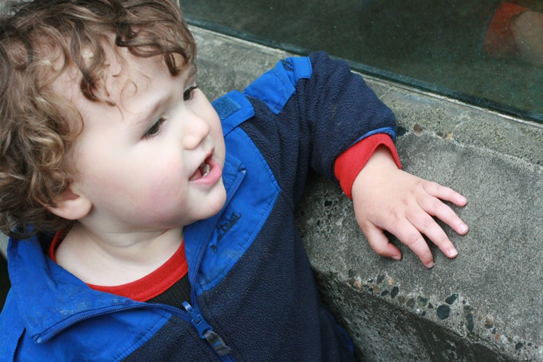 boy looking at sea life at Seattle Aquarium