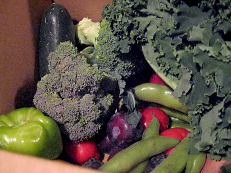 anktangle csa box