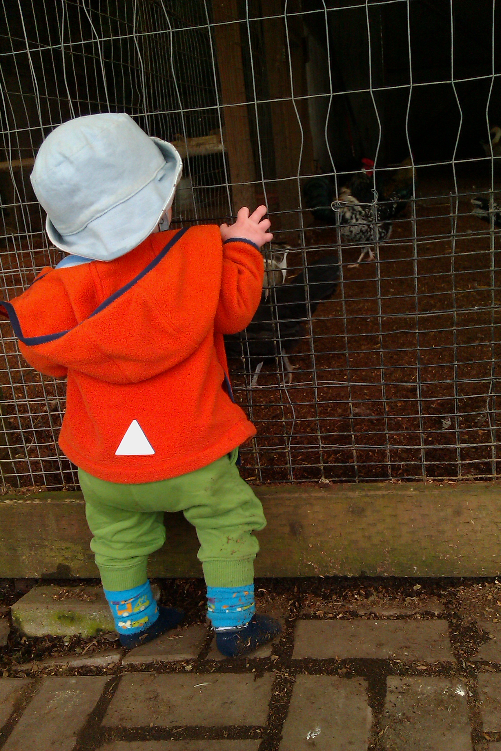 baby standing up in front of hen coop