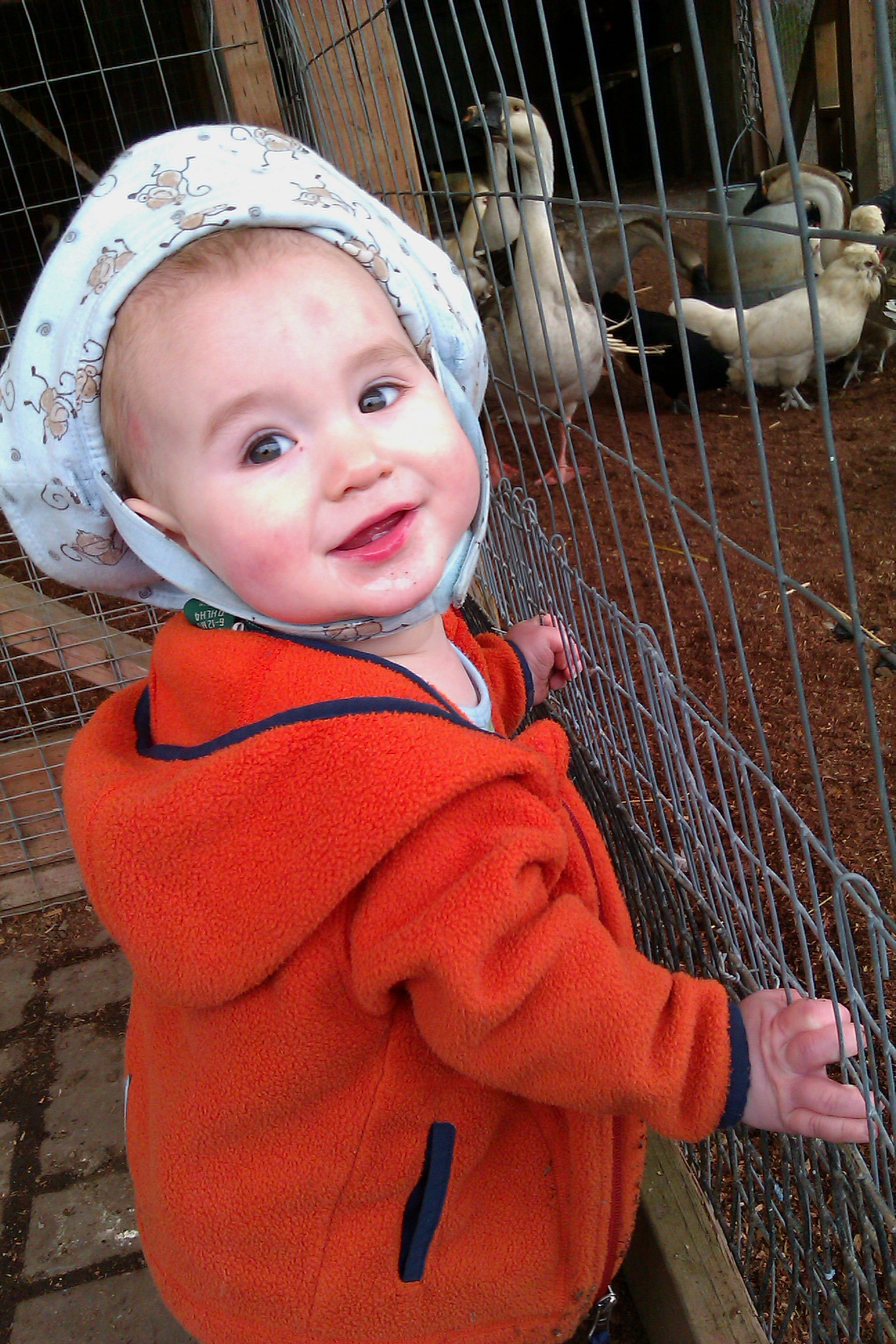 baby standing up holding onto mesh for chicken and geese coop at Flower World
