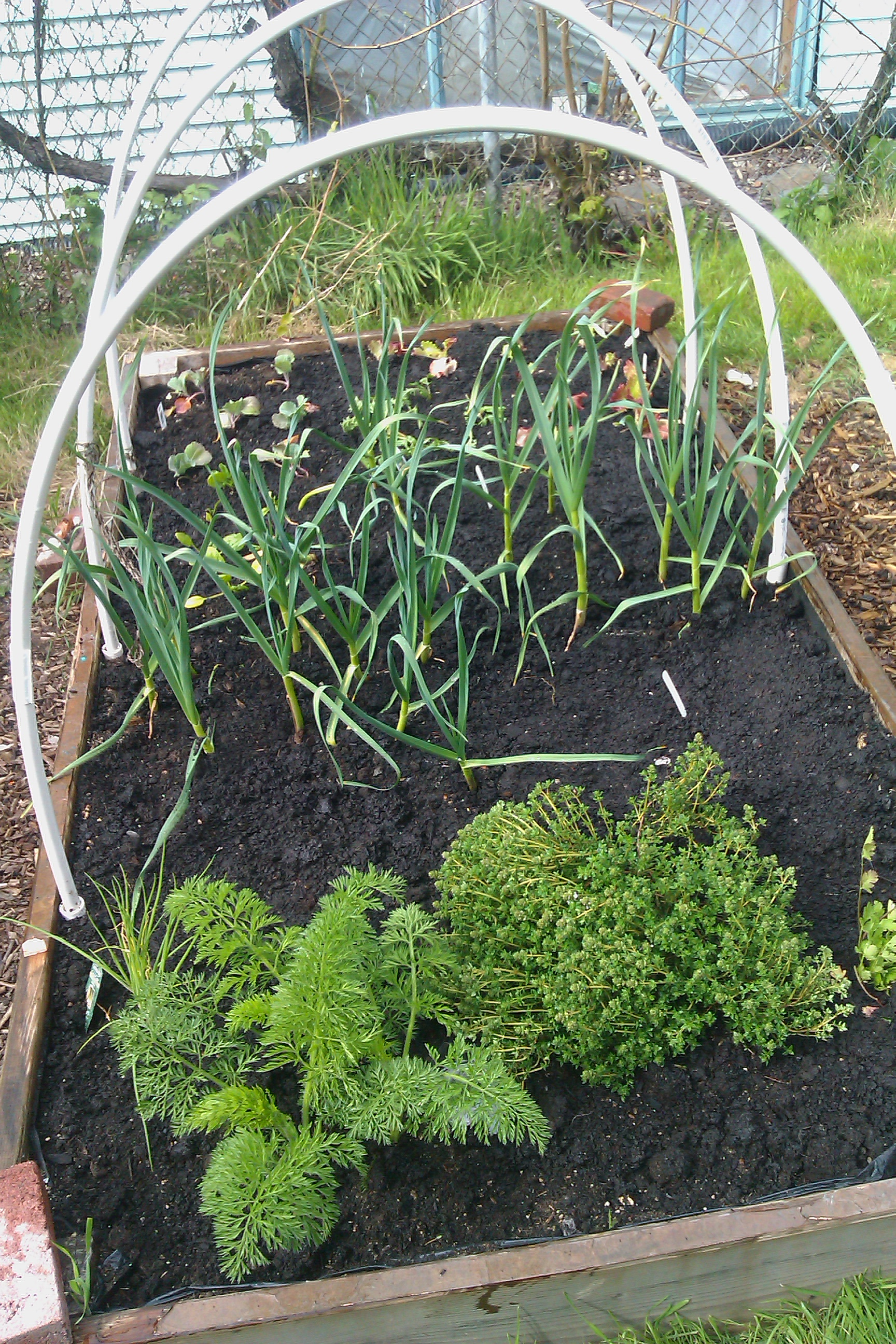 spring garden raised bed