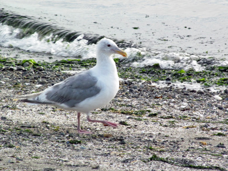 seagull on beach in family camping