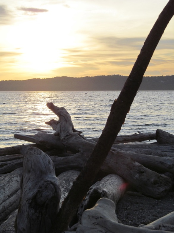 sunset over logs on beach in family camping