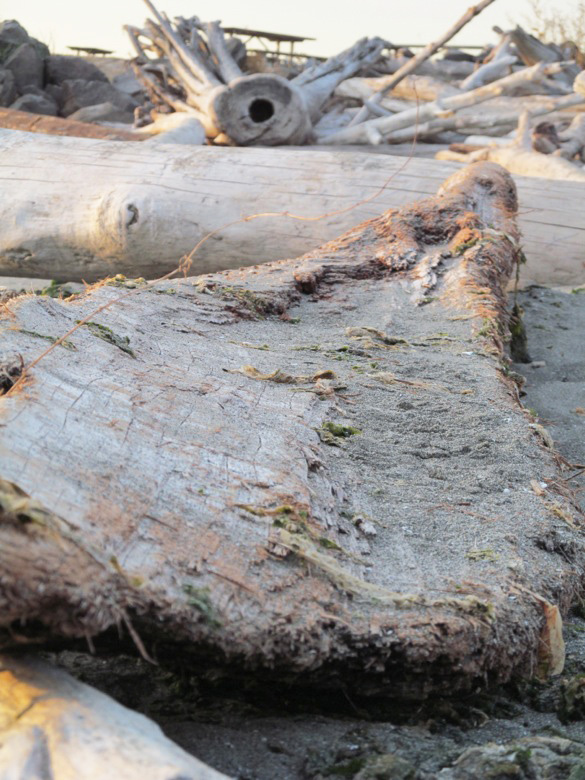 driftwood on beach in family camping