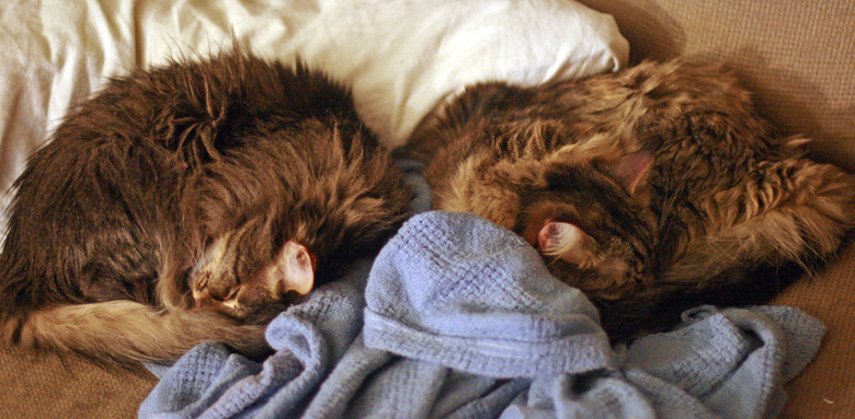 cat sisters curled up in fur circles on the couch