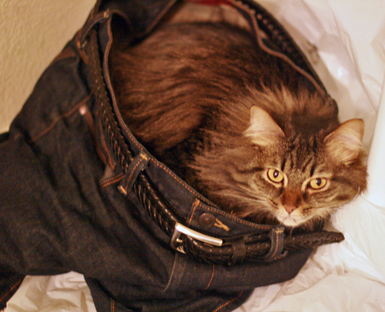 cat wearing pants - pets in jeans photo IMG_7482_zpsa9fa512b.jpg