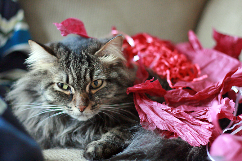 so undignified - stuff on my cat - valentine's day 2013
