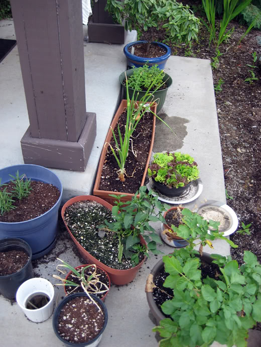 anktangle container garden