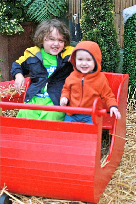 brothers in sleigh at Swanson's Nursery Seattle