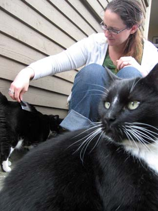 family business — cat sitting