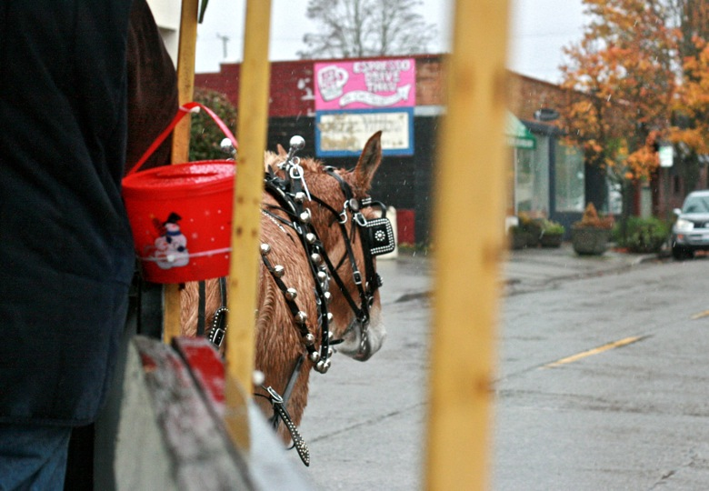 carriage turning the corner — mule carriage ride in West Seattle Junction