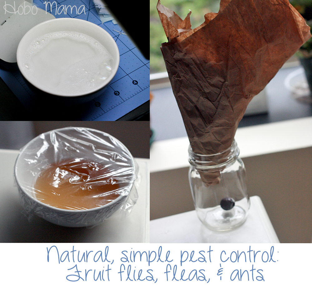 Natural, simple pest control: Fruit flies, fleas, & ants == Hobo Mama