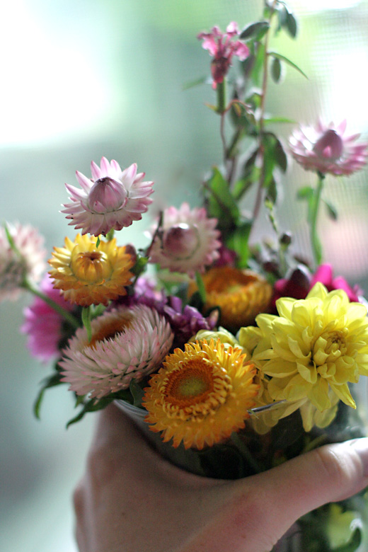 strawflowers bouquet from garden